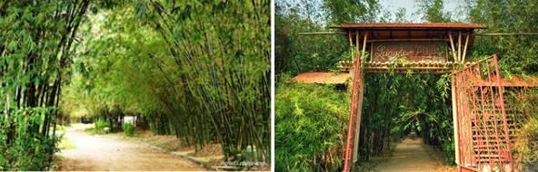 대나무로 둘러 쌓인 베트남의 전통 촌락/출처=베트남민족문화원